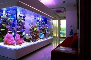 Huge Home Reef Aquarium  Avec Images