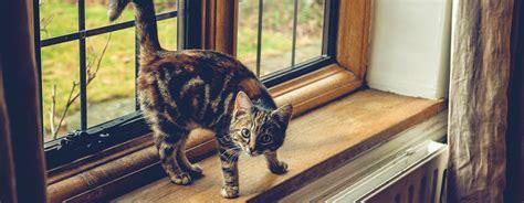 lebensgefahr fuer katzen gekippte fenster sind