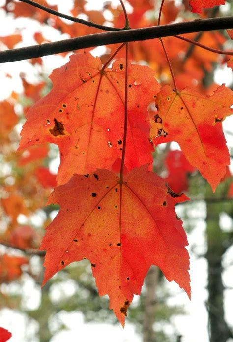 Peak Season Is Near For Dazzling Fall Colors On Arkansas