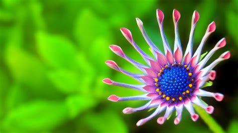 wallpaper beautiful flower green background macro