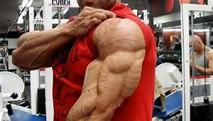 Meet Your Arm Muscles  U2013 Triceps Brachii  U2022 Bodybuilding Wizard