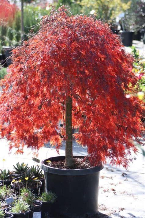 providing austin  premium landscape plants
