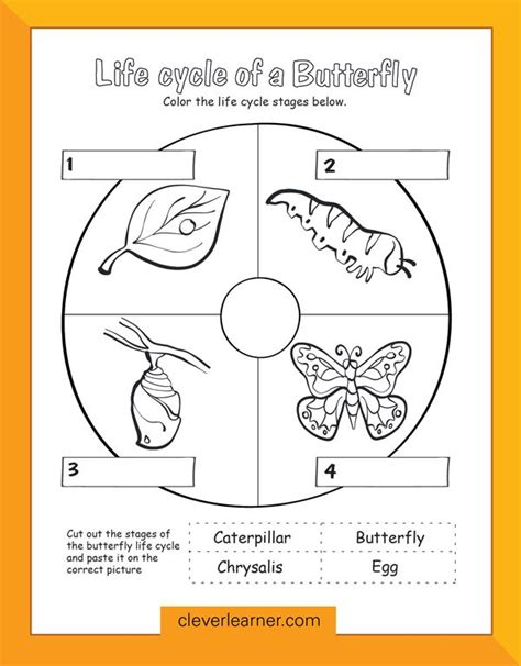 butterfly life cycle for preschool 19 best images about early learning on 723