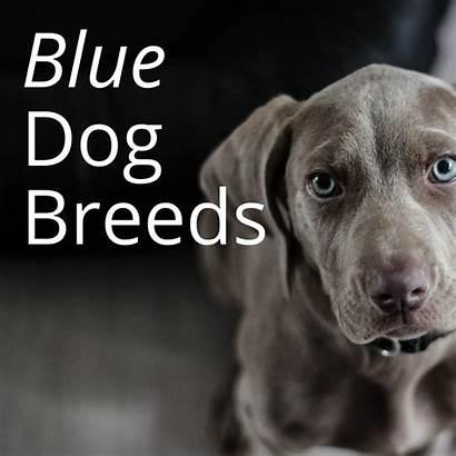 Dog Breeds Dogs Them Toy Animal Makes