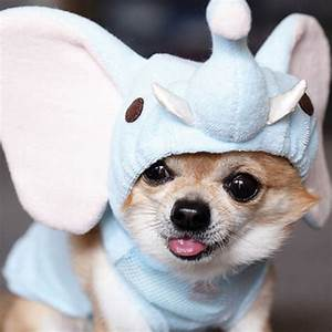 And Now, 11 Crazy Pictures of Dogs in Costumes