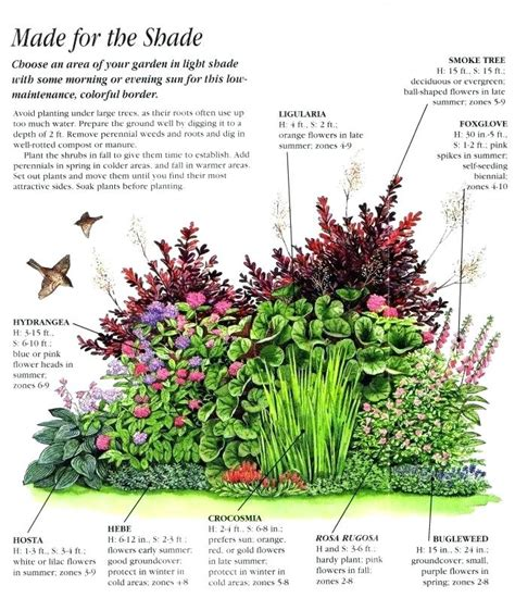 plants for shady areas plants for shaded garden exhort me