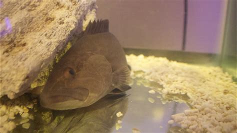 grouper pet feeding