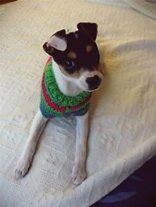 17 Best images about Fox terrier on Pinterest | Bangalore ...