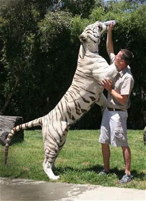 cuisine smit afrique du sud vis ma vie avec un tigre du bengale