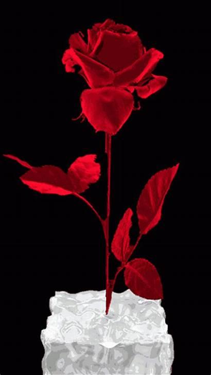 Rose Animation Animated Roses Scraps Decent Code