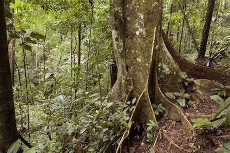Tropical Rainforest kidcyber
