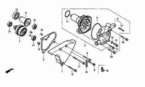 Wiring Diagram Honda Shadow Vt1100