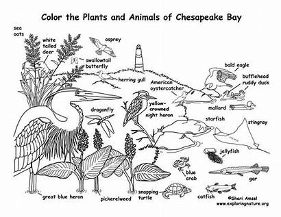 Coloring Chesapeake Bay Labeled Animals Pages Biomes