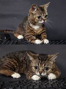 23 best images about lil bub on Pinterest | The internet ...