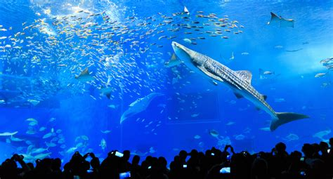 Aquariums Made Attractive through the Power of Technology ...