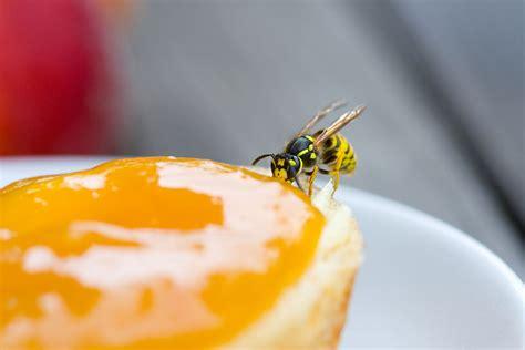 fliegen vertreiben terrasse fliegen auf der terrasse vertreiben was kann gegen fliegen tun with fliegen auf der