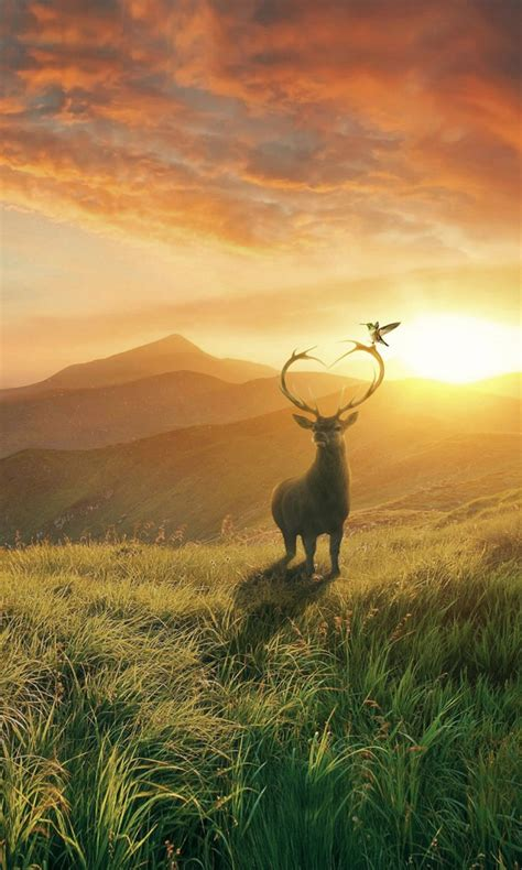 sunset deer mountains wallpapers hd wallpapers id