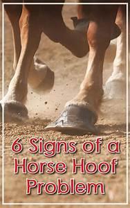 6 Signs Of A Horse Hoof Problem