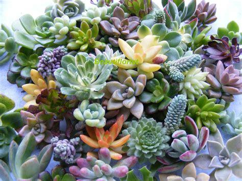 20 Assorted Rosette Succulent Cuttings Assorted Rosette Varieties | eBay