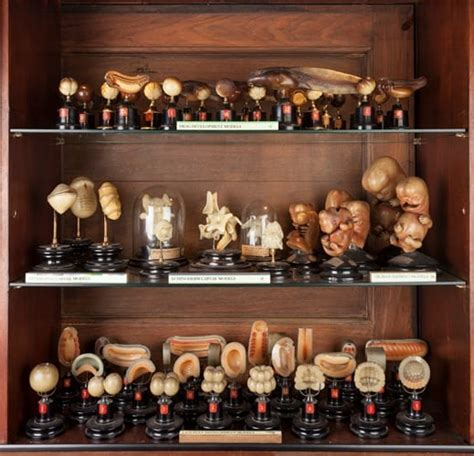 Cabinets De Curiosité by Cabinet Of Curiosity Ucl Museums Collections