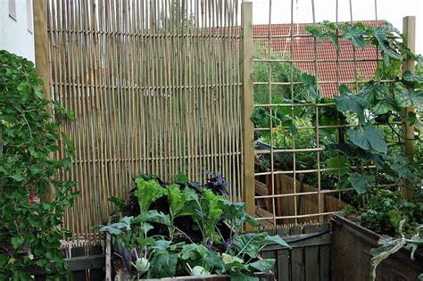 himbeerspalier selber bauen rankgitter und sichtschutzelemente mit bambusst 228 ben selber bauen plants