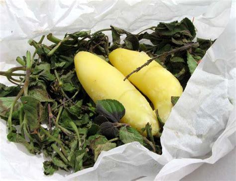 sauge ananas cuisine pommes de terre à la sauge ananas la cuisine du jardin