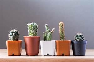 Indoor Cactus Plants: An Introduction - I Love Gardening
