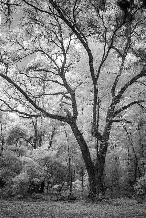 black white florida landscape photography fine art