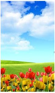 HD Wallpapers Nature Flowers 3d | Wallpaper nature flowers ...