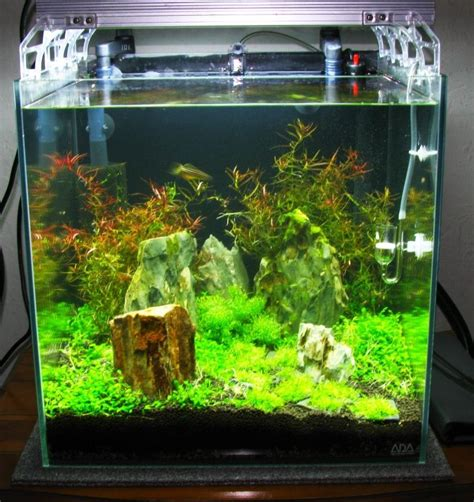 shrimp tank aquascape shrimp cube aquarium aquariums aquarium fish tank