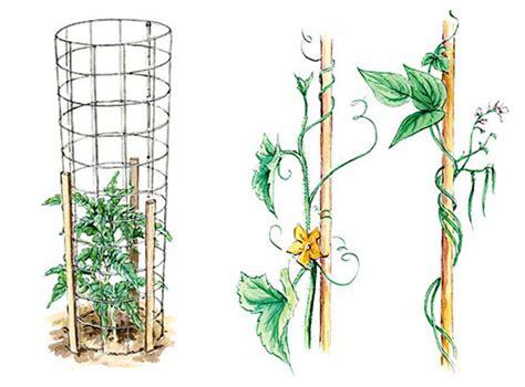 Vertical Gardening Techniques by Vertical Gardening Techniques For Maximum Returns