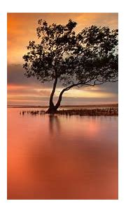 Free download Lonely Tree In Peaceful Sunset Hd Wallpaper ...