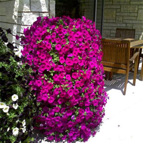 check out these garden projects garden club