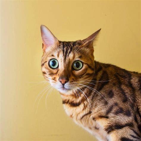 Aizkustinošs fotoprojekts. Arī kaķiem ir jūtas   Cats ...