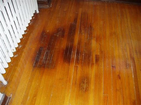 Urine Ruining Hardwood Floors by Pet Stains On Hardwood Floors My Home