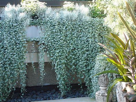 Die Besten Pflanzen Für Sonnigen Standort Im Garten