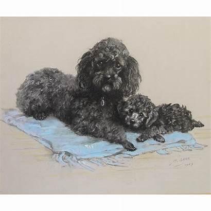 Poodle Dogs Pastel Study Artist Rubylane Antics