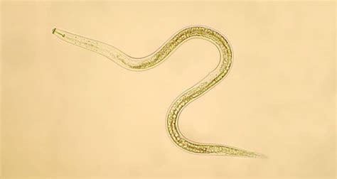 Best Nematodes For Fleas - UPDATED 2020 - A Complete Guide!