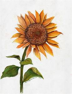 Sunflower Drawing by Robin Martin Parrish