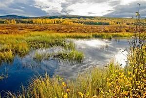Wetlands  Dan