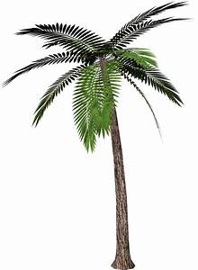 Palm tree PNG images, download free pictures