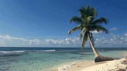 Palm Beach Tree Tropical Loop Ocean Trees