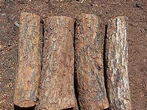 Types of Wood « Paul Bunyans Firewood