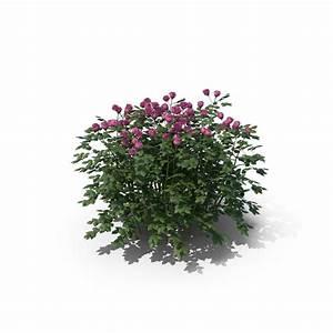 Rose Bush Png Images  U0026 Psds For Download