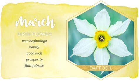 march birth flower daffodil ftdcom