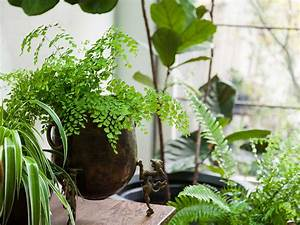 How, Indoor, Plants, Can, Make, A, Room, Healthier