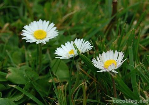 Pavasara ziedi   Cocoblog