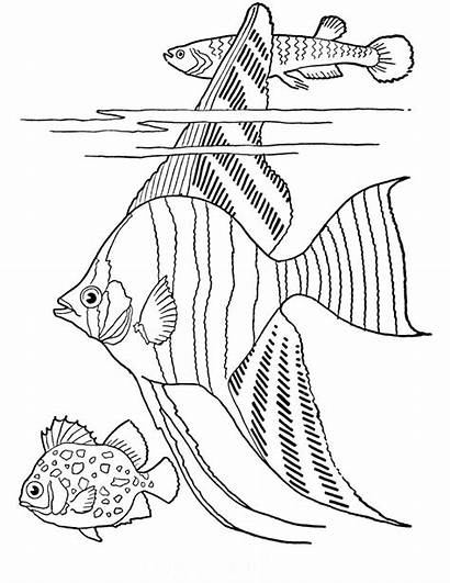 Coloring Adult Printable Fish Tropical Fairy Graphics