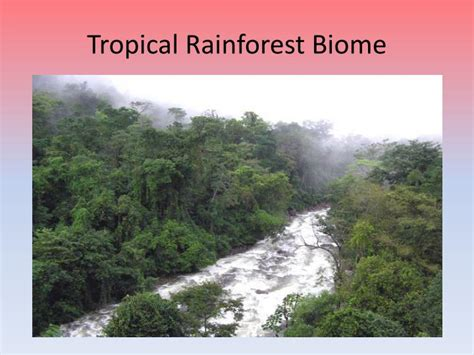 Earth Floor Biomes Tropical Rainforest earth floor biomes tropical rainforest carpet vidalondon