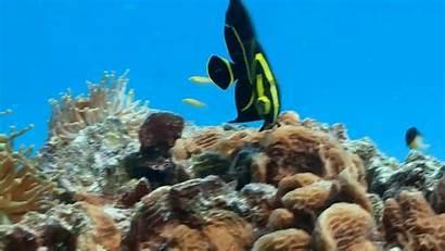 Coral Reef Aquarium Fortnite Gfycat Sleep Relax